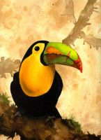 Tucan by DiverCate