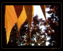 Golden Leaves by Goldey