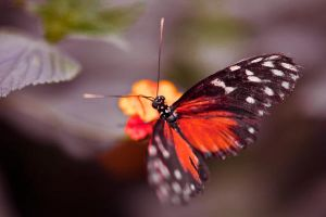 the amazing butterfly by habili-and1