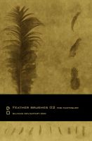Feather Brushes 02 - PS by silinias