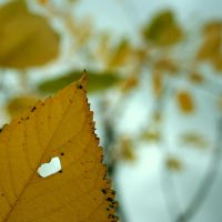 the heart of autumn. by girlwithstripes