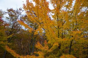White Mountains  Fall Foliage  111 by FairieGoodMother