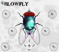 BlowFly by GrynayS