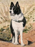 Border Collie 9x12 pastel on Bristol Board 500 by robybaer