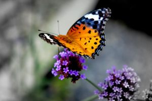 butterfly on a flower by cottoncandy418