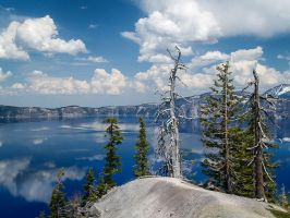 Crater Lake: Trees by j-ouroboros