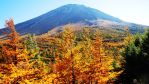 Autumn Leaves at Mt. Fuji by poic