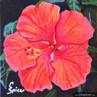 Red Hibiscus by cbspicer