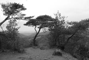 black and white tree on the edge 2 by rayna23