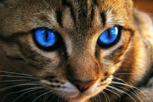 Dark-Blue cat eye by whozZy94