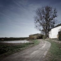 Road and tree by Qo-oQ