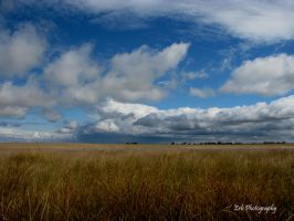 Golden Prairie by erbphotography