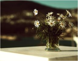 Daisies :... by estellamestella