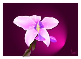 orchid vector by ANOOOP