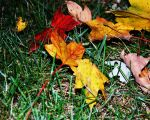 Autumn by marcon-photography