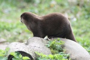 Otter by tsb-stock