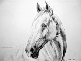 Horse by Ennete