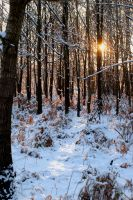 forest under snow by whynotastock