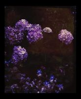 night in the garden by Amalus