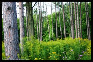 In a late summer woods 2 by Nariane