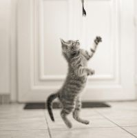 Le petit chat revit... by Douce-Amertume