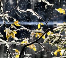 snow in the air II by KariLiimatainen