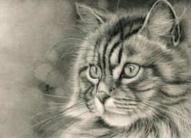 cat in charcoal by Drehli