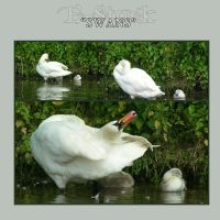 Swan Pack 1 by E-Stock