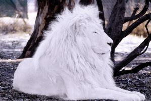 White Lion by bobbyboggs182