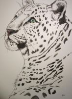 Snow leopard by lizzardhunter