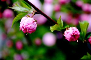 All Pink... and Green by MaroziDawn