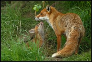 I Love My Mum - Vixen with Cub by nitsch