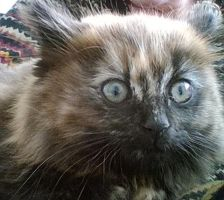say hello to my new kitty by IamNasher