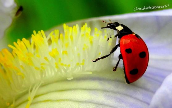 How to brush your teeth when you're a tiny ladybug by Cloudwhisperer67