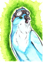 Hawker Budgie by RainbowCrumbs