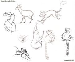 Zoo Studies of Lemurs and such by kayjkay