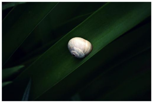 Green Silk by mauro-goncalo