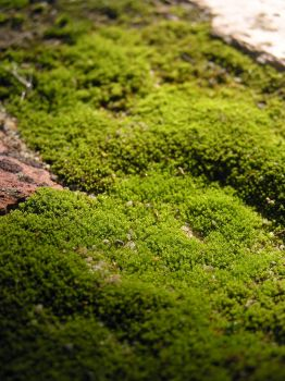 Miniature Forest by jellybush