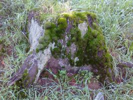 Tree stump by killerlord123