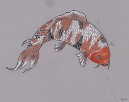 koi fish pencil drawing by sailorhorizon