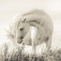 White pose by wombat7