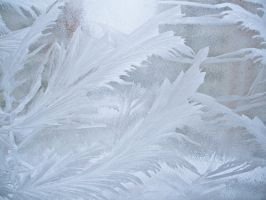 Winter feathers on my window by ale2xan2dra