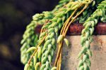 Donkey Tail by Monze1