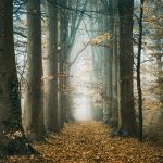 In every leaf, every tear by Oer-Wout