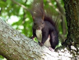 Squirrel 139 by Cundrie-la-Surziere