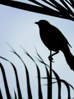 Black Bird by ManuCordoba