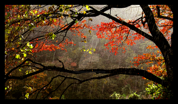Raindrops and Red Leaves Color by theblindalley