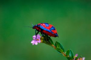 coleoptera II by Chacalxxx