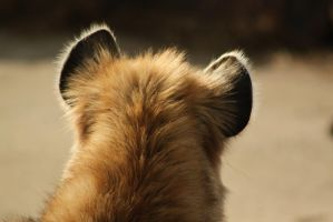 Hyena Ears by roamingtigress