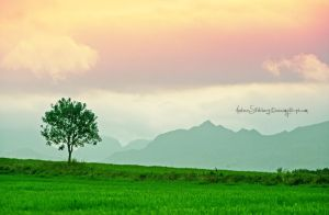Lofoten Tree by Stridsberg